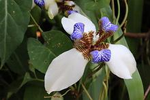 アヤメ科 / お花の写真集