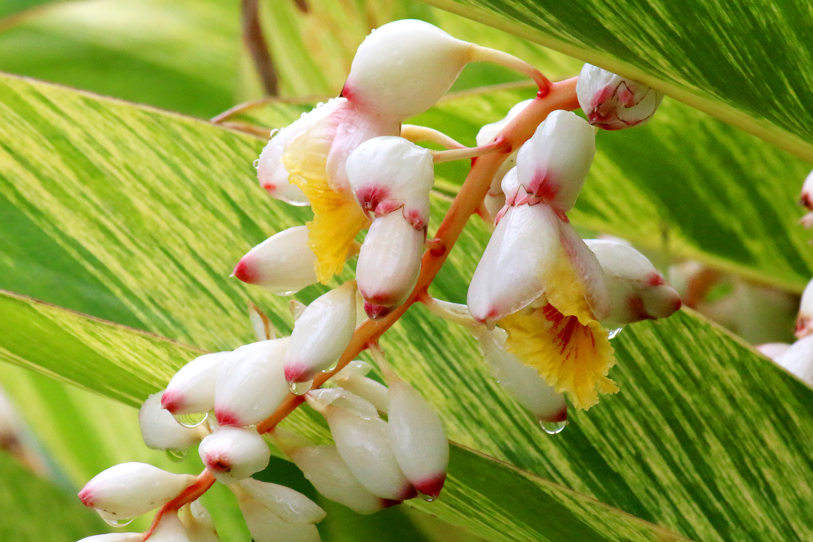 http://www.flower-photo.info/upload/save_image/07271555_53d4a25eb04ce.jpg